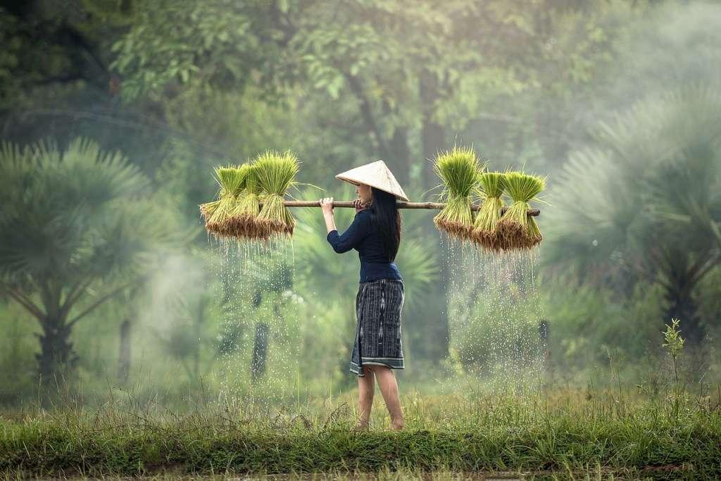 specialites thailandaises